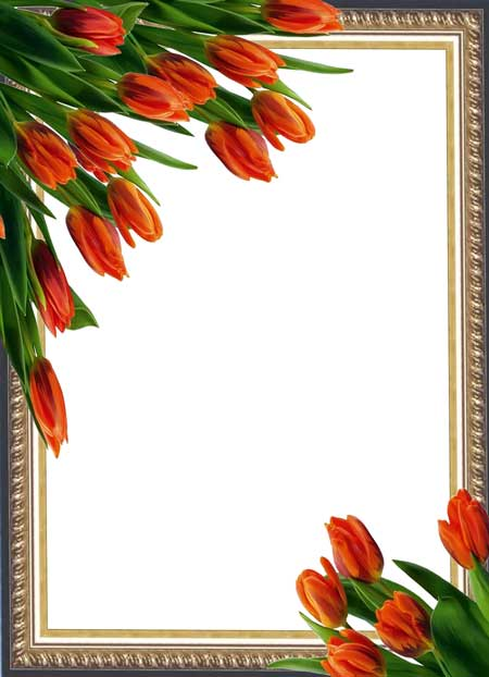Psd photo frame with tulips 1283x1772 300 dpi