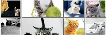 jpg-funny-cats-wallpapers-vr-45