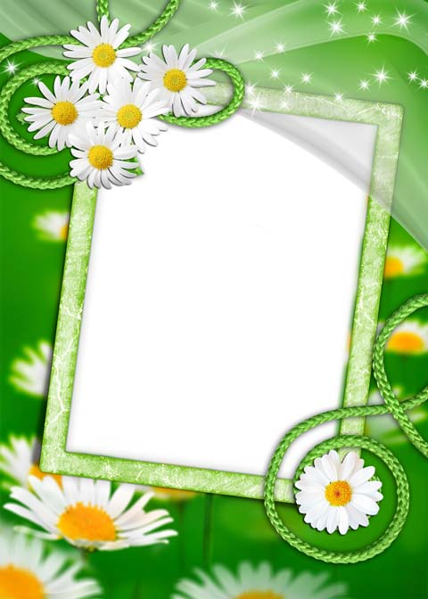 PSD.Green.Photo.Frame.With.Chamomile.1772x2480